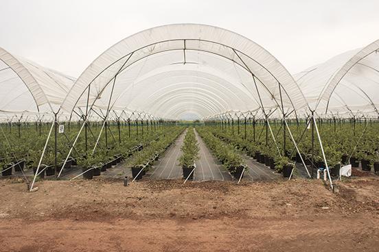 Es un modelo especializado para los cultivos en sustrato, principalmente para arándano y hortalizas.